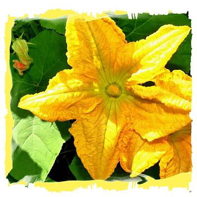 Digital Art - Painted Squash Blossoms by Will Borden