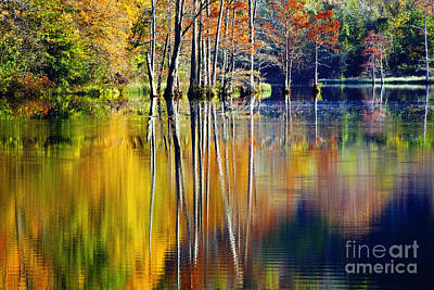 Photograph - Painted Trees At Beaver's Bend by Tamyra Ayles