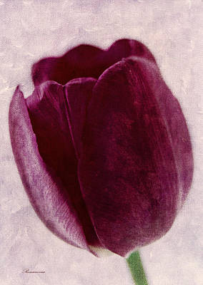 Painted Tulip Art Print