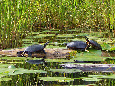 Mixed Media - Painted Turtles On The Little Ausable River by Bruce Ritchie