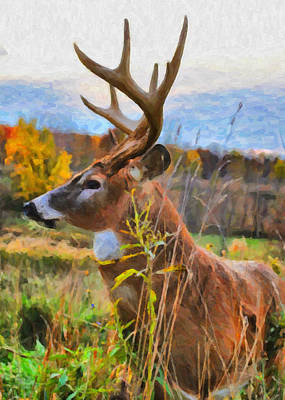 Photograph - Painted Whitetail by Emily Stauring