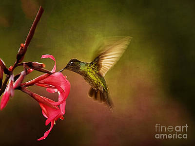 Painterly Hummingbird #1 Art Print by Anne Rodkin