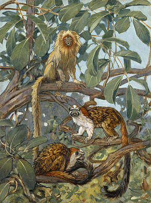 Painting Of Marmosets In The Jungle Art Print by Elie Cheverlange