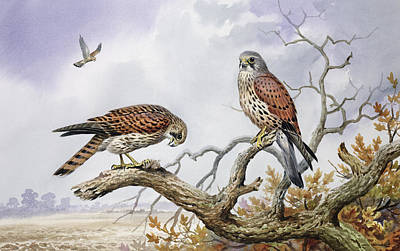 Pair Of Kestrels Art Print by Carl Donner