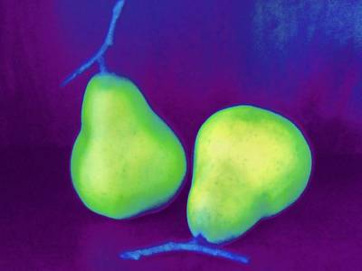 Pear Digital Art - Pair Of Pears Green by Randall Weidner