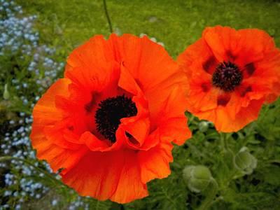 Painting - Pair Of Poppies by Renate Nadi Wesley
