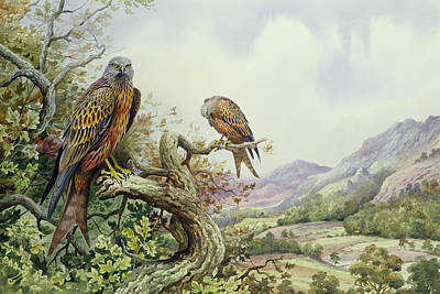 Pair Of Red Kites In An Oak Tree Art Print by Carl Donner