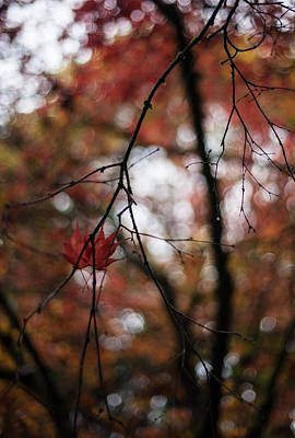 Red Leaves Photograph - Pair Revisited by Mike Reid