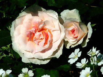 Botanical Garden Photograph - Pale Pink Roses In Garden by Susan Savad