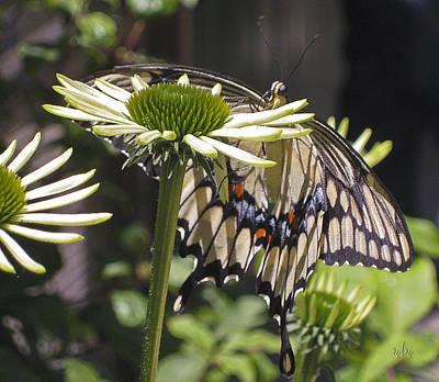 Pale Swallowtail Art Print