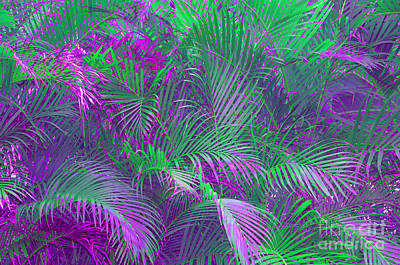 Photograph - Palm Abstract by Cindy Lee Longhini