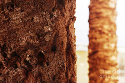 Photograph - Palm And Wall 2 by Agusti Pardo Rossello