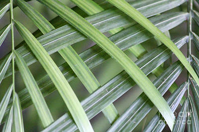 Photograph - Palm Fern Weave No 2 by Alycia Christine