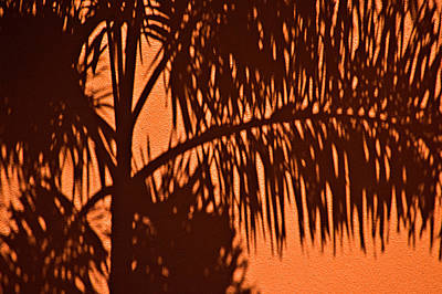 Photograph - Palm Frond Abstract by Carolyn Marshall
