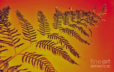 Burnt Digital Art - Palm Frond In The Summer Heat by Kaye Menner