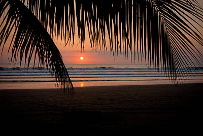 Photograph - Palm Frond Sunset by Anthony Doudt