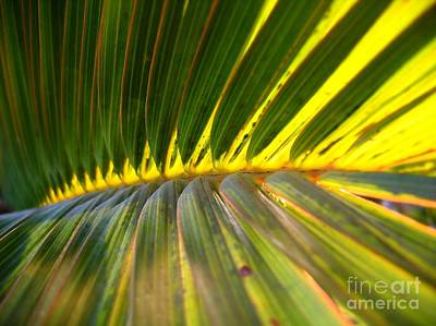 Palm Fronds Illuminated By The Sun Art Print by Yali Shi
