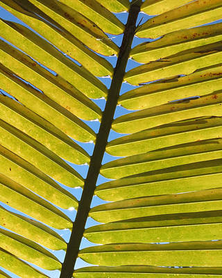 Palm Leaf Print by Chris Andruskiewicz