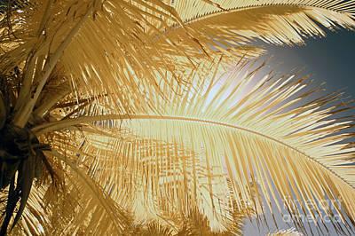 Palm Leaf Art Print by Keith Kapple