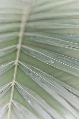 Photograph - Palm Leaf by Lannie Boesiger