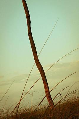 Photograph - Palm by Scott Meyer