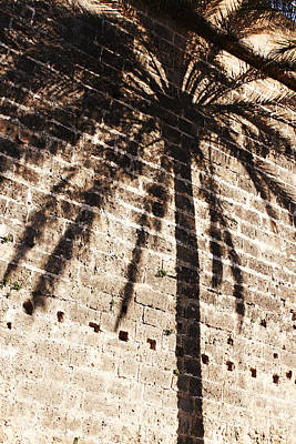Photograph - Palm Shadow by Agusti Pardo Rossello