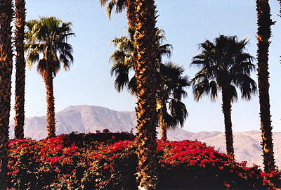 Photograph - Palm Springs' Finest by Barbara Plattenburg