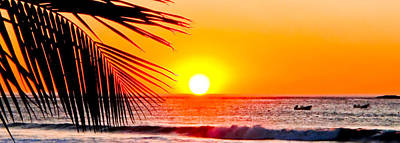 Photograph - Palm Sunrise by Jim DeLillo