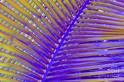 Photograph - Palm Tree Abstract by Cindy Lee Longhini