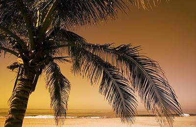 Palm Tree And Sunset In Mexico Art Print