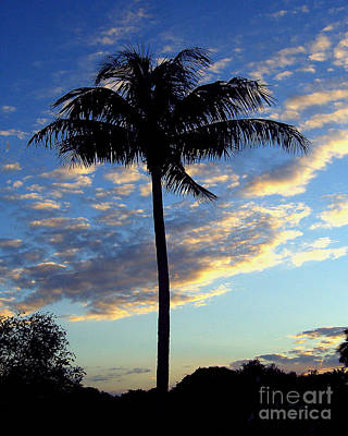 Photograph - Palm Tree At Dusk by Merton Allen