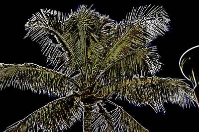 Photograph - Palm Tree by Elizabeth  Doran