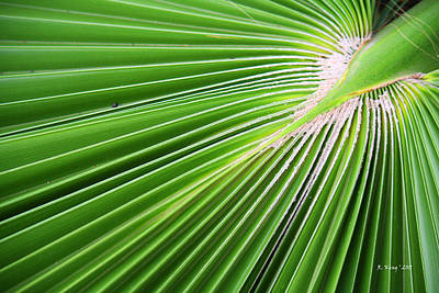 Photograph - Palm Tree Frond by Roena King