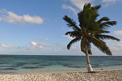 Digital Art - Palm Tree On A Beach by Brandon Bourdages