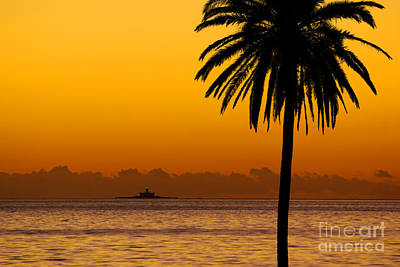 Palm Tree Sunset Art Print by Carlos Caetano