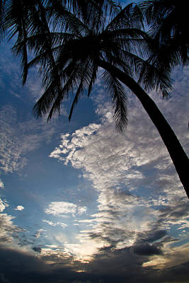 Photograph - Palm Trees And Clouds by Roger Mullenhour