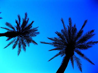 Palm Trees At Dusk Art Print