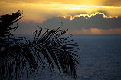 Royalty Free Images Photograph - Palm Trees At Sunset by Ivan SABO