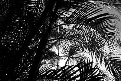 Photograph - Palm Trees by Colleen Cannon