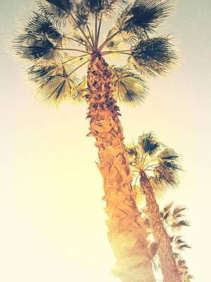Photograph - Palm Trees In Alicante - Spain by Marianna Mills