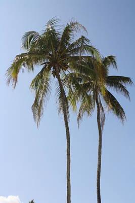 Palm Trees In Love Art Print by Natalija Wortman