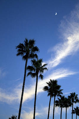 Palm Trees In The Sky Art Print by Terry Thomas