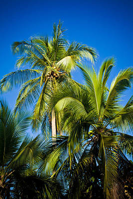Palm Trees In The Sun Art Print by Anthony Doudt