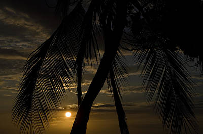 Palm Trees Silhouetted By The Setting Art Print by Todd Gipstein