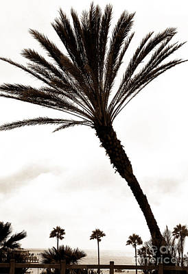 Photograph - Palm View In Santa Monica by John Rizzuto