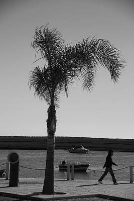 Photograph - Palm Walk by Jez C Self