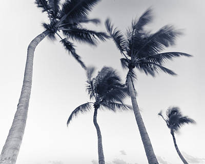Photograph - Palms 5 by Scott Meyer