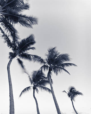 Photograph - Palms 6 by Scott Meyer