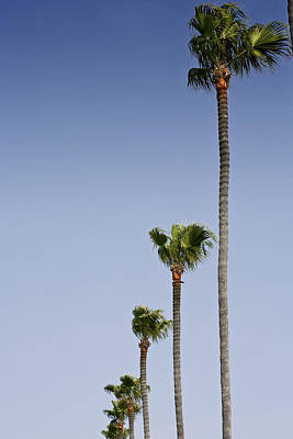 Photograph - Palms by Al Hurley
