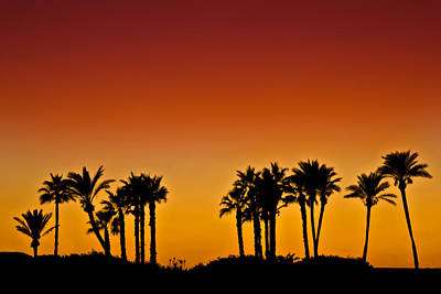 Photograph - Palms At Sunset by Nadya Ost